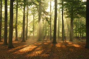 Für naturverbundene Menschen ist die Baumbestattung häufig eine bevorzugte Alternative zur herkömmlichen Bestattung.