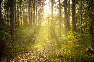 Die Waldbestattung ermöglicht, einen Ruheort direkt in der Natur zu finden.