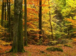 Was die Waldbestattung kosten wird, hängt von vielen Faktoren ab.