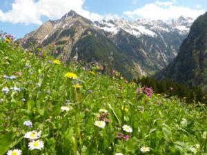 Die Wiesenbestattung findet häufig in den Schweizer Alpen statt.