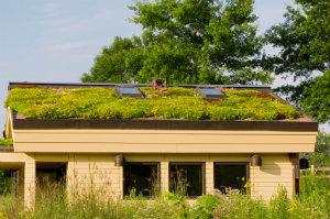 Die Dachflächenbegrünung macht nicht nur optisch etwas her, sondern hat auch Vorteile für Umwelt und Wohnqualität.