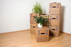 Eine Entrümpelung oder Haushaltsauflösung meint die Räumung einer Wohnung mitsamt Nebenräumen, Hof und Garten.